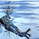 Winter blues - Frozen Pond! by Poete100