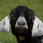 black goat by etccdb