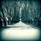 Winter Sun by James McKenzie