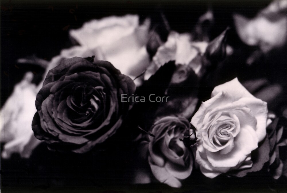 In a Bunch by Erica Corr