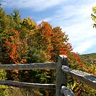 Autumns Splendor  by Gary L   Suddath
