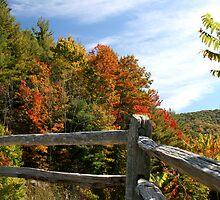 Autumns Splendor  by Gary L   Suddath
