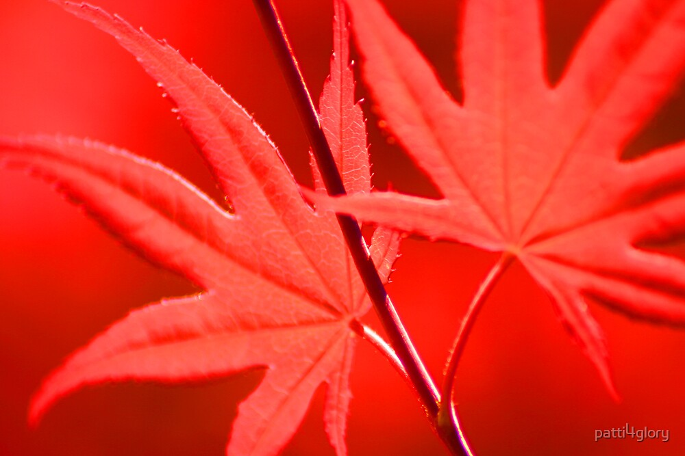 Red Maple by patti4glory