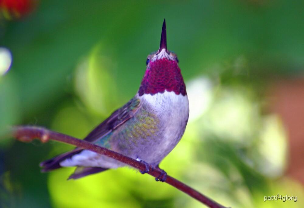 Ruby-Throated Beauty by patti4glory