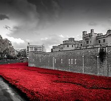 Tower Of London Poppies (Red on Black & White) by StephenRphoto