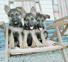 3 pups by kristiepatricia