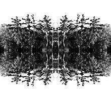 Swamp Trees (Black and White) Photographic Print