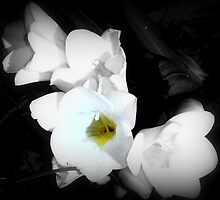 Ophelia by Sian Houle