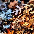 February Leaves by Nadya Johnson
