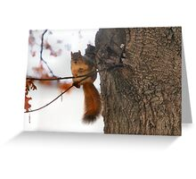 Darn these wind gusts! I almost dropped my snack! Greeting Card