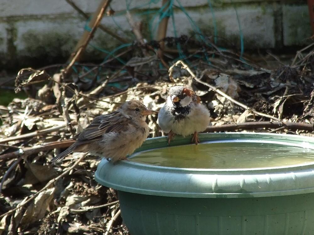 birds by matjenkins