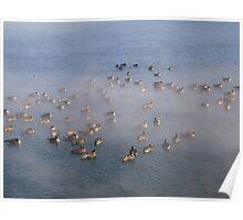 Ducks in Frozen Water Poster