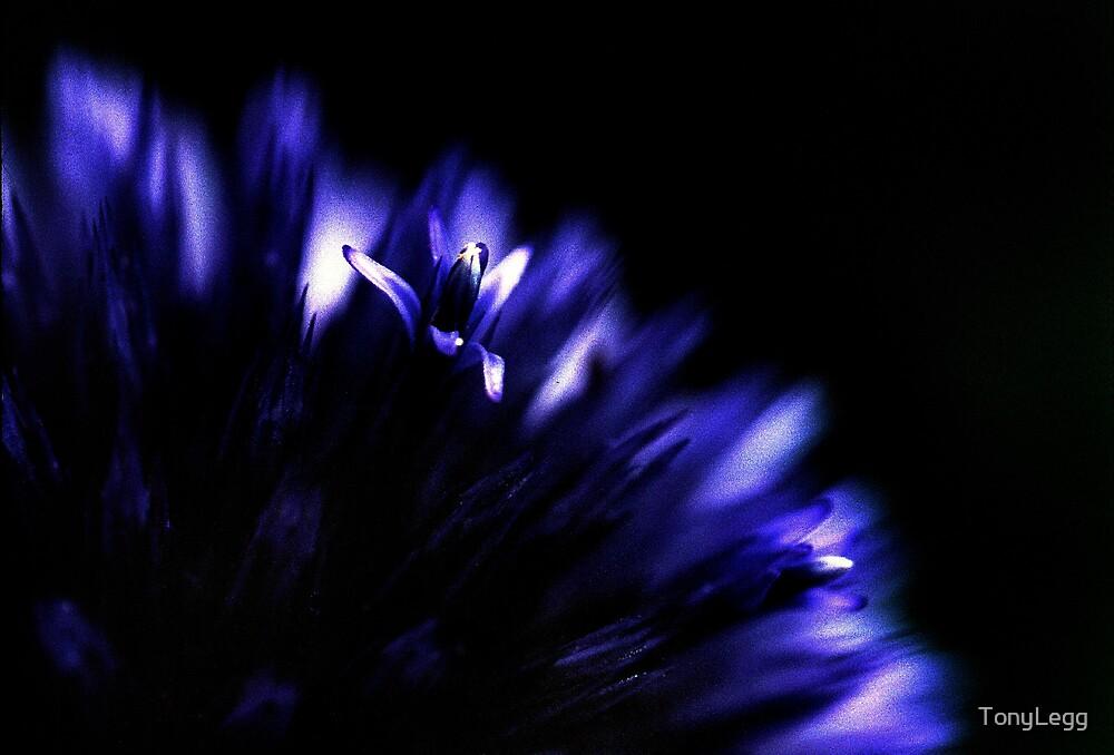 blue haze by TonyLegg