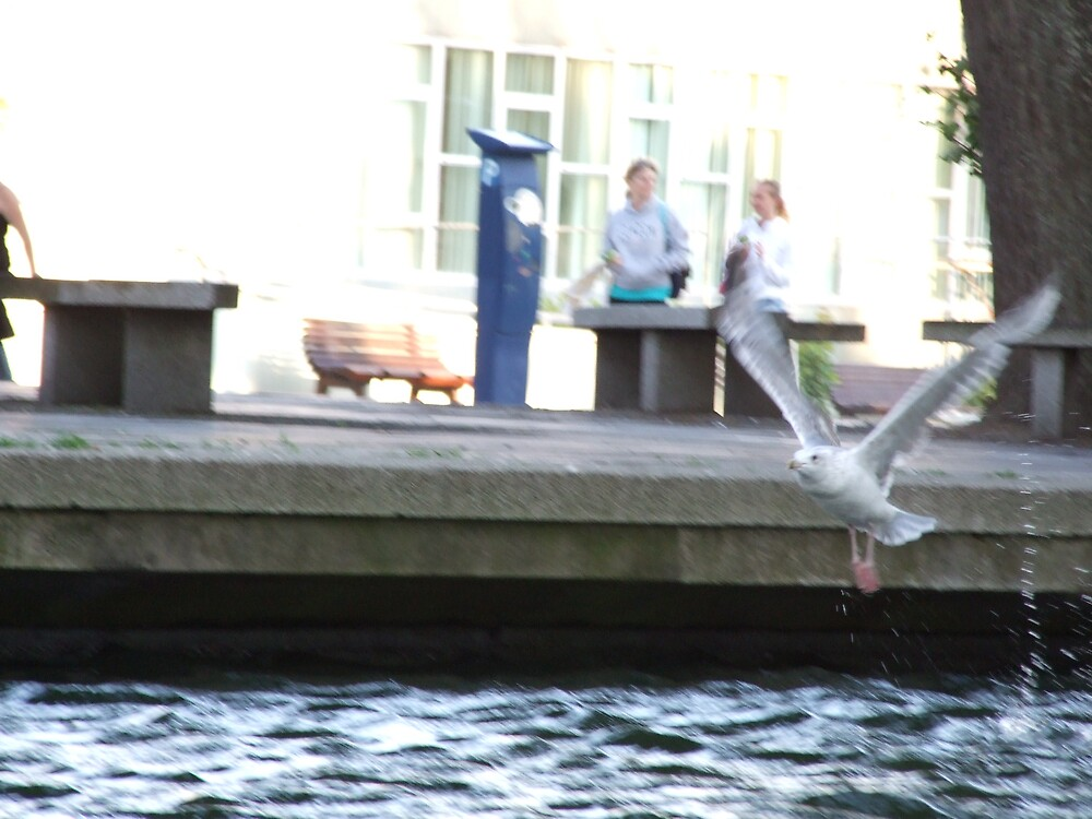 bird in flight by matjenkins