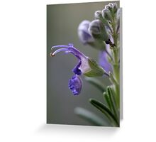Rosemary flower Greeting Card