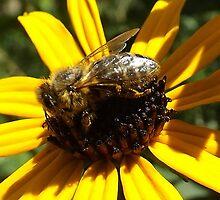 Bee-utiful by Timothy  Ruf