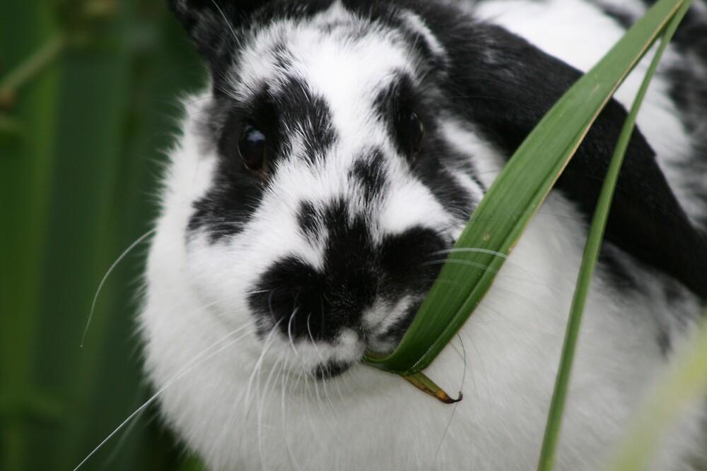 Rabbit Eating by XMissySJx