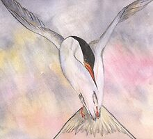 Tern in Flight by Hazel Moore