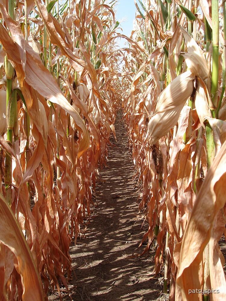 Missouri cornfield by patsyspics