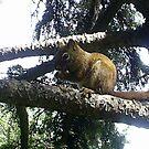 squirrel in tree by oilersfan11