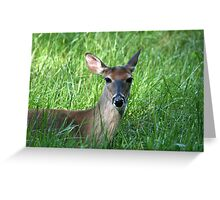 White-Tailed Doe Greeting Card
