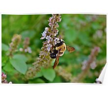 The nature of the bee Poster