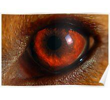 B-eagle Eye Poster