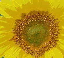 Sunflower by njonesford