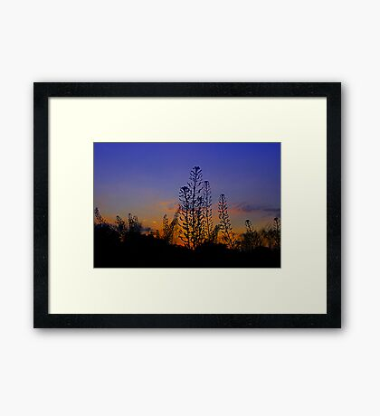 Sunset Meadow Framed Print