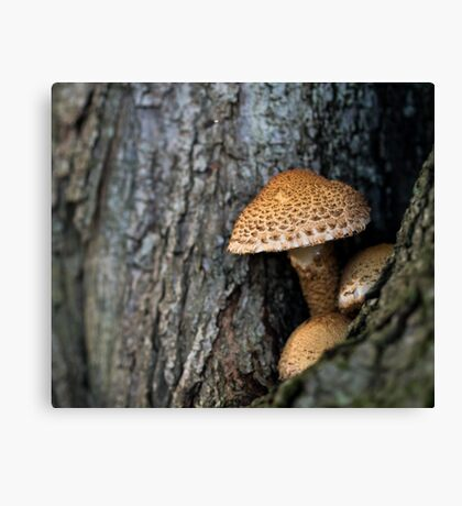 Toadstool in the rainy woods Canvas Print