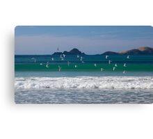 Terns take flight  Canvas Print
