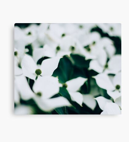 White elegant floral Canvas Print