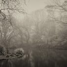 Duckpond - Misted In by Geoff Smith