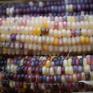 Indian Corn White by Carmen Mandel-Cesreo