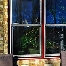 Orange Tree in the Window by Eileen McVey