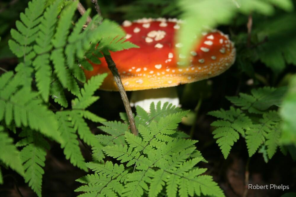 Hidden Fungi by Robert Phelps