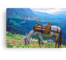 In Clover on Mt. Parnassus, Delphi, Greece Canvas Print