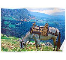 In Clover on Mt. Parnassus, Delphi, Greece Poster