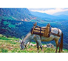 In Clover on Mt. Parnassus, Delphi, Greece Photographic Print