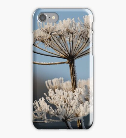 Haw frost on a seed head. iPhone Case/Skin