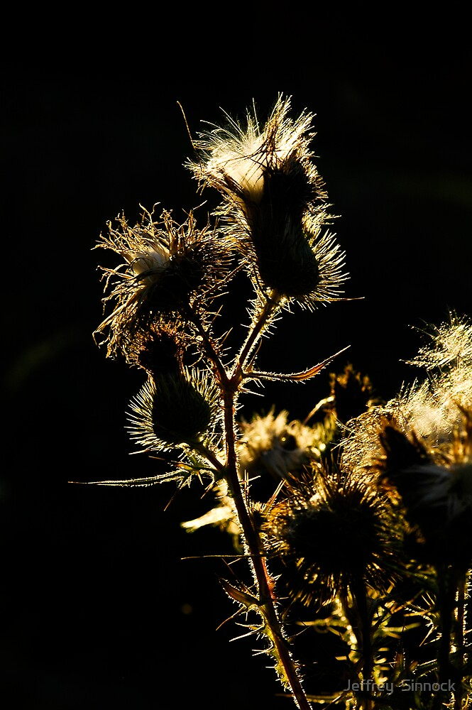 Thistle's at sunset by Jeffrey  Sinnock