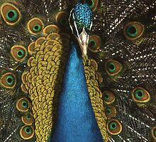 The Peacock by John C McBain