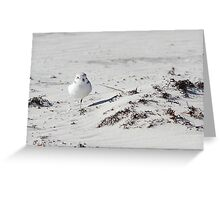 Snowy Plover Greeting Card