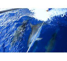Dolphin Watchin Whitsundays Photographic Print