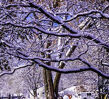 LIMBS COVERED IN SNOW by pjm286