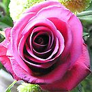 Large Red Rose by Woodie