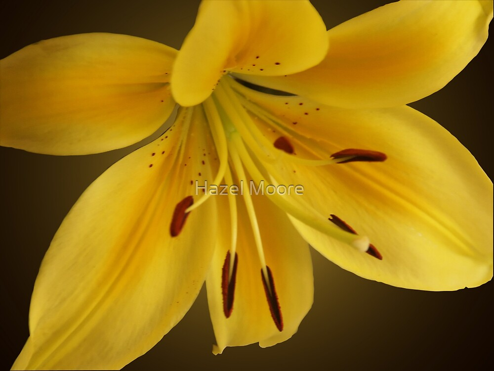 Lovely Lily by Hazel Moore