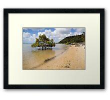 Mangrove in the sea Framed Print