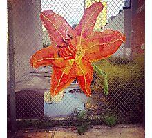 Yarn Art Flower in East Harlem, New York City Photographic Print