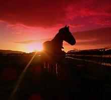 Sunset Horse by nosbigdivad